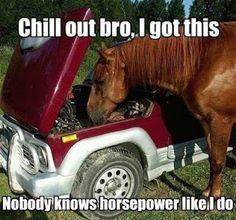 Funny Horse | funny-horse-car-engine.jpg