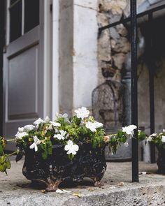 Its Weekend!!! And I planning a very quiet cosy snugly one!  . . . . . #nabateaconceptstore #nabateastyle #floweroftheday #flowerofinstagram #flowermagic #inspiremyinstagram #seekmoments #naturelovers #nature_wizards #naturegram #huffpostgram #visualsoflife #visualart #floweroflife #flowergram #instagrid #darlingmovement #livethelittlethings #feelfreefeed #underthefloralspell #flowermagic #fieldofgold #alittlebeautyeveryday #gatheredstyle #simplethingsmadebeautiful #stillwithstories…
