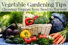 How to grow vegetables in your garden