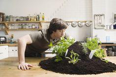 10 vegetales que puedes plantar en tu casa para que nunca te falten en la cocina