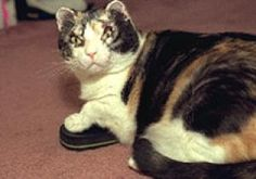 Scarlett the cat, a calico hero who drew worldwide acclaim after rescuing her five kittens from a 1996 Brooklyn fire, has passed away.