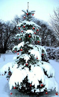 Christmas tree from DENMARK (by Henrik Bidstrup Jørgensen)