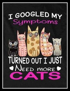Hello there bright people. Are you looking or have you any I think you a face. So our boards for never miss any cuteness of Crazy Cat Lady, Crazy Cats, Funny Cats, Funny Animals, Cats Humor, Animals Images, Gatos Cats, Cat Signs, Photo Chat