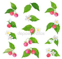 Strawberry Blueberry, Raspberry, Clip Art, Stock Photos, Watercolor, Pen And Wash, Watercolor Painting, Watercolour, Raspberries