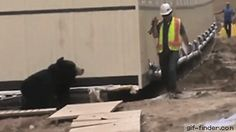 Guy Scares Co-Worker with Bear Costume | Gif Finder – Find and Share funny…