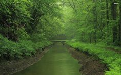 river-rain-forest-tree-bridge.jpg (1920×1200)