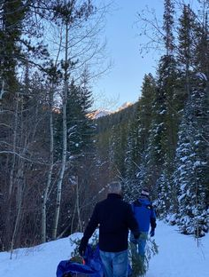 Cutting Your Own Christmas Tree: What to Know | Insider Families Fresh Cut Christmas Trees, Christmas Tree Farm, Very Merry Christmas, Charlie Brown Tree, Colorado Cabins, Winter Hiking, Forest Service, Snow Mountain, Cabin Rentals