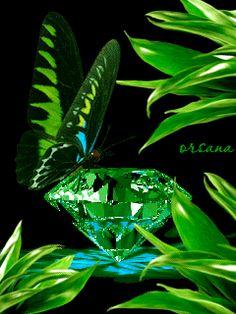 ... Beautiful Butterflies, Beautiful Flowers, Butterfly Gif, Random Gif, Good Night Gif, Flowers Gif, What Image, Glitter Gifts, Fox Art