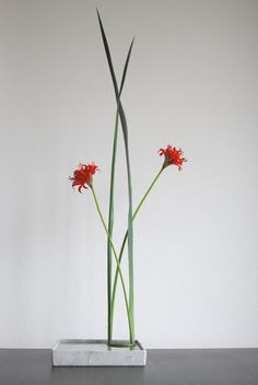 https://flic.kr/p/5C5V6i | Ikebana 'Yucca and red Nerine embrace'