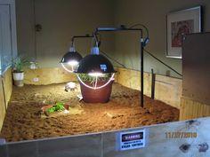 1000+ images about Tortoise homes and ideas on Pinterest Tortoise ...