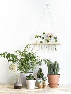 Hanging shelf with test tubes