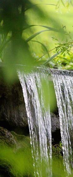 Lily Pond, Tropical Paradise, Water Garden, Water Features, Land Scape, Feng Shui, Shade Garden, Garden Design, Scenery