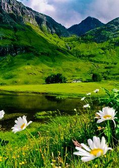 djferreira224: Wild flowers at Glencoe, Scotland ~ Photo by Natascha Hoiting