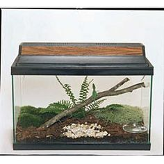 Ordering this weekend.  Need to add Anoles to the family.  Had them growing up - fun, fast and cute.