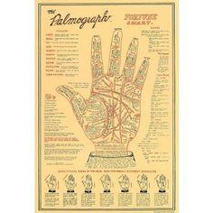 Amazon.com: (11x17) The Palmograph Fortune Chart Art Print Poster: Home & Kitchen