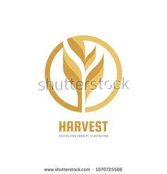 Harvest - vector logo template creative illustration. Cereal organic sign. Ecology symbol. Bio nature insignia. Agriculture concept. Design element.