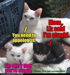 25 Times Animals Wished They Were An Only Child - Funny Animal Quotes - - Cheezburger Image 9158075904 The post 25 Times Animals Wished They Were An Only Child appeared first on Gag Dad. Funny Animal Jokes, Funny Cute Cats, Cute Funny Animals, Cute Baby Animals, Funny Jokes, 9gag Funny, Adorable Kittens, Funny Shit, Really Funny Memes