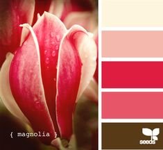 Wedding Colour Palette - Magnolia colour scheme by Anlij Palettes Color, Colour Schemes, Color Combos, Color Patterns, Colour Chart, Magnolia Colors, Magnolia Mom, Magnolia Kitchen, Magnolia Design