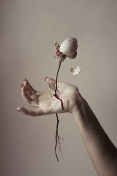 'Enchanted Rose', by Elisa Scascitelli