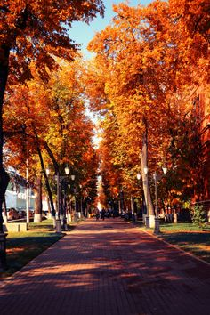 10 Breath-Taking Places To Visit In Autumn Autumn Scenery, Autumn Trees, Autumn Leaves, Fallen Leaves, Autumn Cozy, Autumn Fall, Autumn Aesthetic, All Nature, Fall Pictures