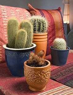 Cactus plants radiate Yin energy, that slowly circulates inside of cactus succulents in the form of absorbed water, and Feng Shui the house. Also cactus spines tips are able to shoot negative energy that feels like hundreds of arrows, poisoned by harmful energy. Good Feng Shui placement of cactus plants is very important for creating  balanced eco style interior decorating design