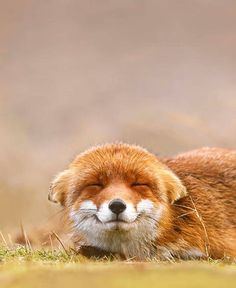 Best collection of cute Fox pictures. These pictures will make you fall in love with the fox all over again. Fox is one of the cutest animals in the universe. Cute Creatures, Beautiful Creatures, Animals Beautiful, Cute Baby Animals, Animals And Pets, Funny Animals, Happy Animals, Smiling Animals, Wild Animals
