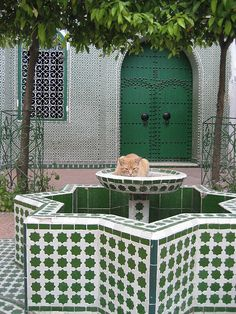 Cat in Fountain, Chefchaouen, Morocco