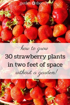 Hanging strawberry planters produce a huge number of berries and can be placed anywhere that you have access to sun and water!