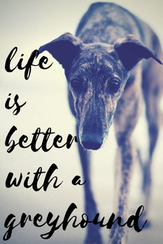 See more at https://mypupboutique.com/collections/greyhound #greyhound