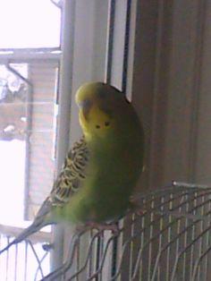 My baby bird tiko