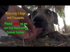 Three Dogs And Nine Puppies Are Rescued In The Desert…How They React Will Amaze You