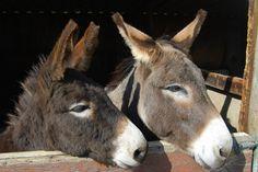 The Island Farm Donkey Sanctuary | par Jennifleur79
