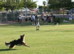 Off leash facility (dog park) at Countryside Park in Mesa, Arizona. This dog park opened in August 2010.