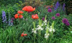33 Blumensorten für den Bauerngarten - fresHouse
