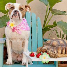 Faites connaissance avec la chienne Puka et sa meilleure amie la tortue (Photos) - Insolite - Wamiz
