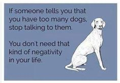 If someone tells you that you have too many dogs, stop talking to them.  You don't need that kind of negativity in your life.