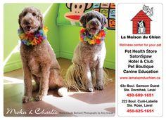 Moka & Charlie 2013 Calendar, Pet Boutique, Moka, Pet Health, Fundraising, Education, Pets, Animals, Animales