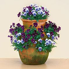 Blue and violet pansies and violas in a strawberry planter