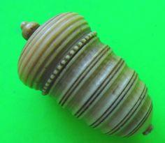 Antique acorn-shaped thimble holder.  Vegetable ivory.