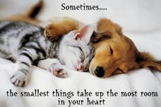 Sometimes, the smallest things take up the most room in your heart #quote