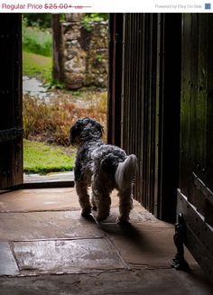ON SALE Terrier English Countryside by lostkatphotography on Etsy