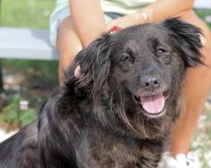 Jo Jo, 9-year-old Lab/Border Collie mix  Kids 10 or older, no other dogs  Jo Jo is a sweet, friendly gal that loves to be petted, loves attention, and would love to go to a quiet home.