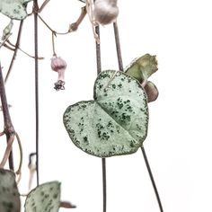 Wind Chimes, Hearts, Plant, Friends, Outdoor Decor, How To Make, Instagram, Amigos, Boyfriends