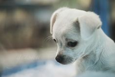 Cute puppy looking so sad