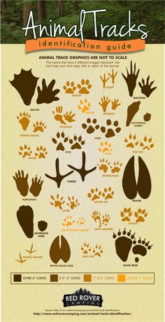 Check out our animal tracks identification guide to see if you just missed a snowshoe hare or a black bear!