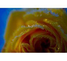 'Frozen Rosa ' by Helen Kelly Framed Prints, Art Prints, Frozen, Food, Art Impressions, Essen, Yemek, Frozen Movie, Meals