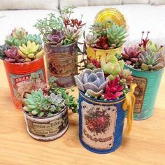 succulent garden care 48 Awesome Repurposed Succulent Planters Ideas - Succulents are perfect plants for dry gardens and are easy to root and grow. Once you learn how easy it is to propagate succulent plants, its a great. Types Of Succulents, Growing Succulents, Succulents In Containers, Container Plants, Cacti And Succulents, Planting Succulents, Container Gardening, Planting Flowers, Propagating Succulents