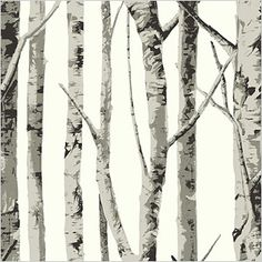 Seabrook birch tree wallpaper featured on the set of Once Upon a Time