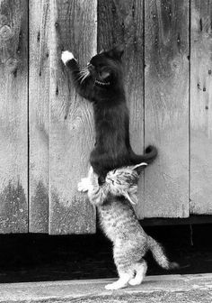 """""""Lift me up""""!!!! """"Ok ok, your heavier than I thought. How much did you eat anyway?!!"""""""