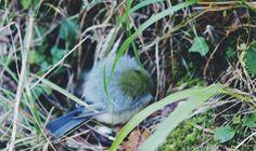 BlueBird #Empordà